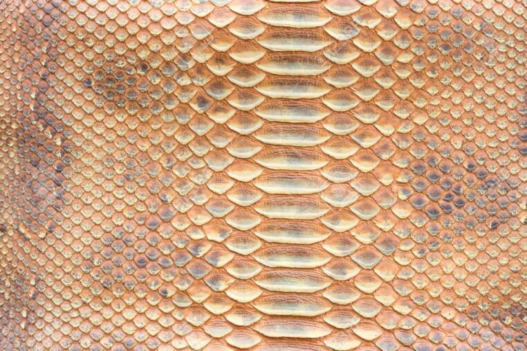72982057 genuine python snakeskin leather snake skin texture background